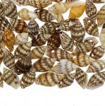 Kirjud spiraalsed teokarbid/ Spiral Shell Beads / 9-18 x 5-12mm