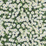Tapestry Furnishing Art. BB/91210-01
