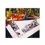 Metsloomade motiividega tikkimiskomplekt-laudlina, Duftin Art.5222