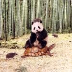 Pandakaru, kilpkonn, bambusmets, trikookangas, kangakupongi mõõtmed 150cm x115cm Art.11842