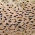Pruunikirju geparditaoline kunstkarusnahk Nr.11