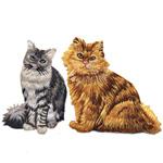 Kissat, kissaeläimet