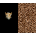 Kangas leopardimustriga, kupong 120cm x 150cm, Stenzo, Art.4857