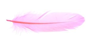 QK17 Roosa sulg 14-18cm pikkusega