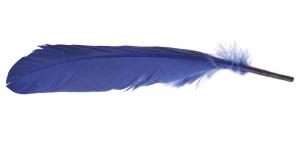 QE13 Tume hallikassinine sulg 24-26cm pikk, 3-7cm lai