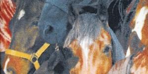 Puuvillane fotokangas lhobustega nr.115/700.428 Värv 001
