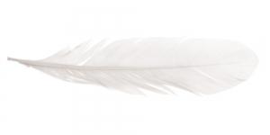 QK19 Valge sulg 14-18cm pikkusega