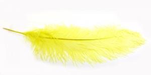 QI3 Helekollane marabu sulg 57-60 cm pikk, 25-28 cm lai