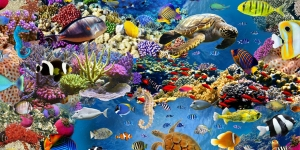Tugevam prinditud korallrahu mustriga puuvillane kangas, Art. BB91123-01