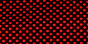 Trikookangas, Punased täpid, mustal taustal, 160cm