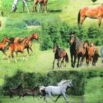 Paksem puuvillane kangas, hobused 140cm, 91299 - 22