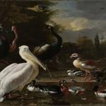 Puuvillane trikookangas suure linnumaalinguga Art.2846